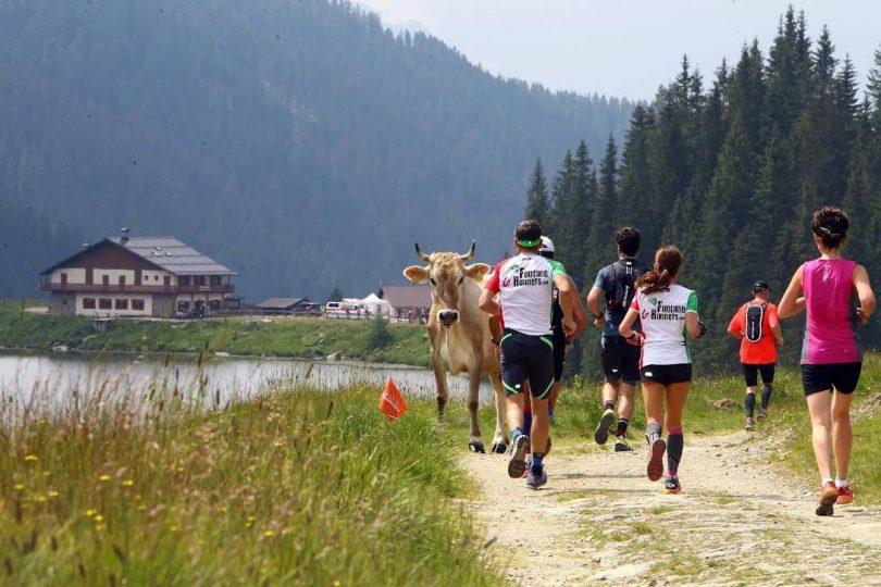 dolomiti marathon con mucca